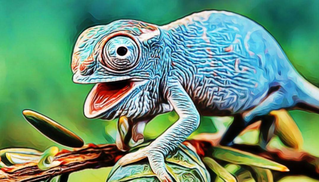 Especialidad de reptiles